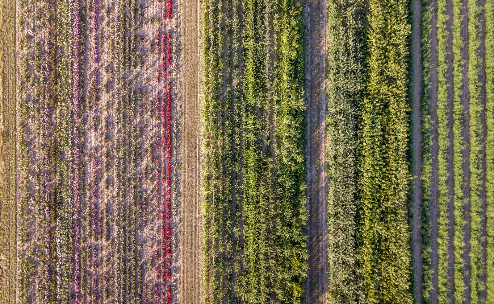 Feld aus Vogelperspektive mit verschiedener Bepflanzung, Blog von Cradle to Cradle NGO