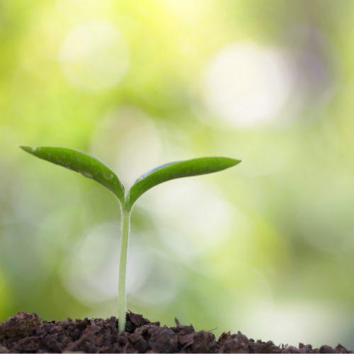 kleines Pflänzchen in Erde vor grünem Hintergrund