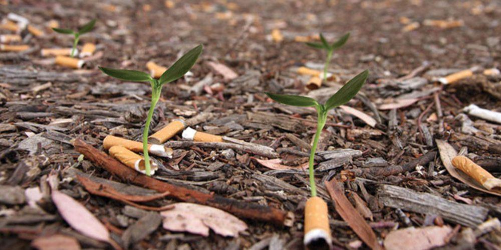 Stoff für Diskussion Kompostierbare Zigarettenstummel Kopie